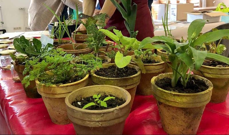 Sa, 8. Mai:  Wurmlinger Pflanzentauschtag findet statt!